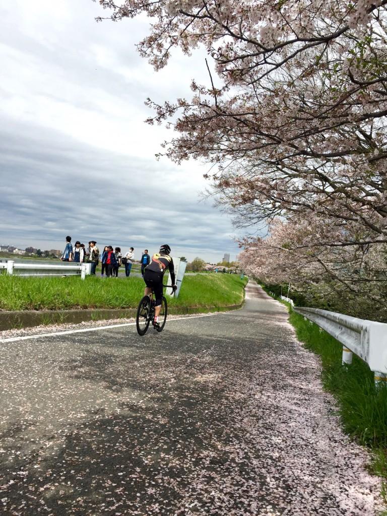 桜とロードバイク