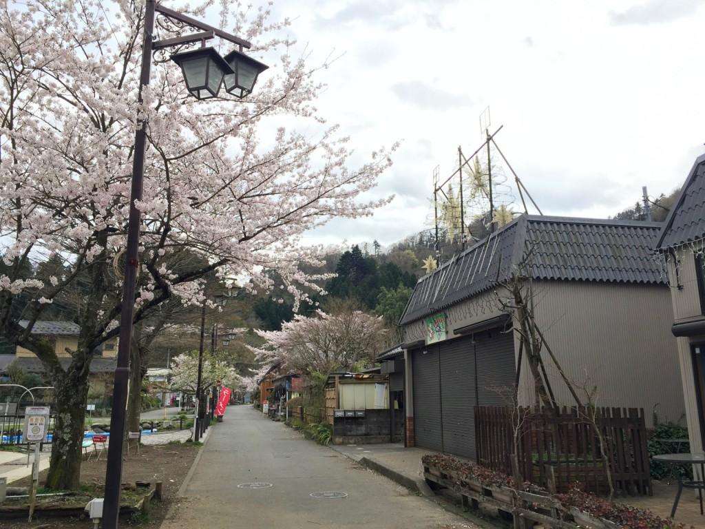 桜が満開の宮ヶ瀬湖畔園地