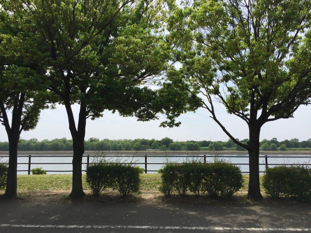彩湖の景色